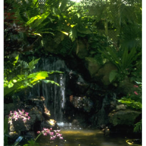 jungle cropped