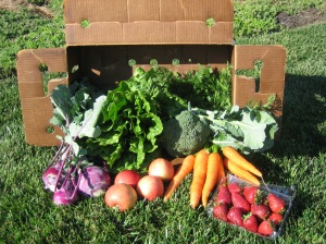 What a box of produce from your local CSA might contain