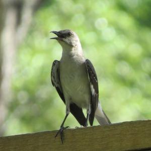 bird-2546438_1280